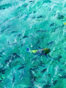 Fargerike fisker.